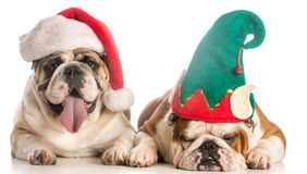 Christmas dogs Royalty Free Stock Photos