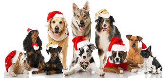 Christmas dogs. Group of christmas dogs isolated on white Stock Images
