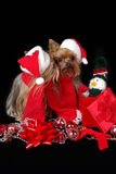 Christmas dogs kissing. Two Yorkshire-Terrier dressed up for Christmas and kissing Royalty Free Stock Photos