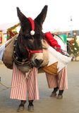 Christmas Donkey Royalty Free Stock Images