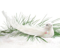 Christmas Dove Stock Photography
