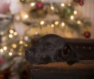 christmas dreaming στοκ φωτογραφία με δικαίωμα ελεύθερης χρήσης