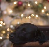 christmas dreaming στοκ φωτογραφίες