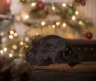 christmas dreaming στοκ εικόνα