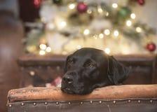 christmas dreaming στοκ φωτογραφίες με δικαίωμα ελεύθερης χρήσης