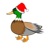 A Christmas duck isolated on a white background Royalty Free Stock Image