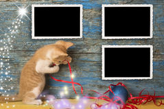 Christmas empty photo frames funny cat. Christmas three vintage empty photo frames, funny playful kitten on primitive wooden background stock images