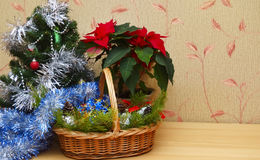 Christmas Eve. Ornaments, Christmas tree and poinsettia Stock Image