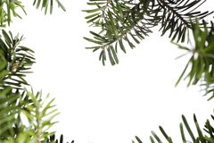 Christmas evergreen background Stock Images