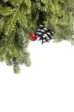 Christmas Evergreen decoration isolated on white. Stock Photo