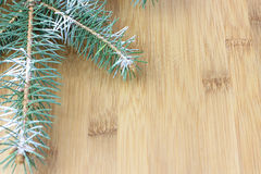 Christmas evergreen spruce tree Royalty Free Stock Photography