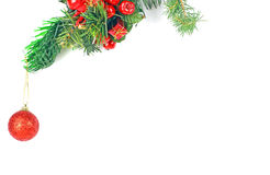 Christmas evergreen spruce tree Stock Photography