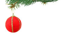 Christmas evergreen spruce tree Stock Image