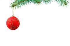 Christmas evergreen spruce tree Royalty Free Stock Photo