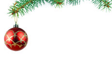 Christmas evergreen spruce tree Royalty Free Stock Images