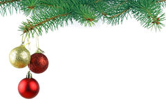 Christmas evergreen spruce tree Stock Photo