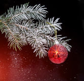 Christmas evergreen spruce tree with snow and red glass ball Stock Photography