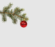Christmas evergreen spruce tree with snow and red glass ball Royalty Free Stock Images