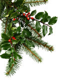 Christmas Evergreens. Winter or Christmas-themed corner/background with real evergreen tree and holly branches isolated on a white background Royalty Free Stock Images