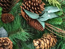 Christmas Evergreens with pine cones stock images