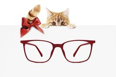 Christmas eyeglasses gift card, ginger cat with red spectacles a royalty free stock photos