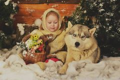 A Christmas fairytale. A liitle girl, hugging a dog of northern breed. An artificial interior of the winter forest Stock Photos