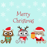 Christmas family of cats Royalty Free Stock Image