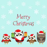 Christmas family of owls Stock Photos