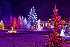 Christmas fantasy - park & forest in xmas lights stock photography