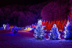 Christmas fantasy - pine trees in x-mas lights. Cazma, Croatia Stock Image