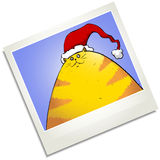 Christmas fat cat Polaroid Royalty Free Stock Photo