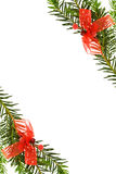 Christmas festive border with pine tree. Branches and red ribbons decorations. Isolated on white background Stock Image