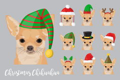 Christmas festive chihuahua dog wearing celebration hats. Christmas festive collection of cute chihuahua puppy dogs wearing celebration new year ornament hat and Stock Photos