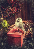 Christmas Festive gift  box with bird , basket and spruce branches on rustic wooden background with Wreath. Stock Photos