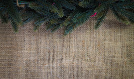 Christmas fir Stock Photography