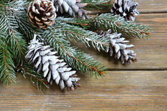 Christmas fir branch covered with artificial snow Royalty Free Stock Photo