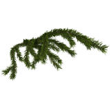 Christmas fir branch isolated on white Stock Photos