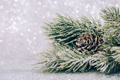 Christmas fir branch with pine cone Stock Photo