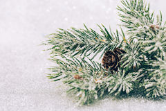 Christmas fir branch with pine cone Royalty Free Stock Photos