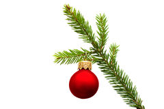 Christmas fir branch with red ball Royalty Free Stock Photo