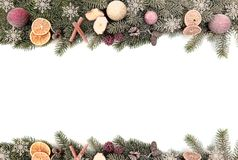 Christmas fir branches isolated against white background royalty free stock images