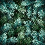 Christmas fir branches Royalty Free Stock Images
