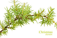 Christmas fir branches on a white background Stock Image