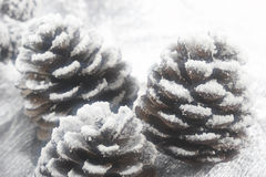 Christmas fir cone Royalty Free Stock Photo