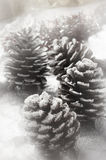 Christmas fir cone Stock Photography