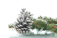 Christmas fir-cone with fir branches Royalty Free Stock Photo