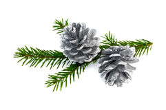 Christmas fir cones on a branch Royalty Free Stock Photo