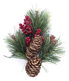 Christmas fir cones. Decoration, isolated on white background Stock Image