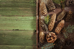 Christmas fir cones Stock Image