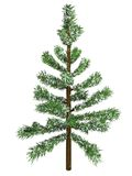 Christmas fir with snow Royalty Free Stock Images